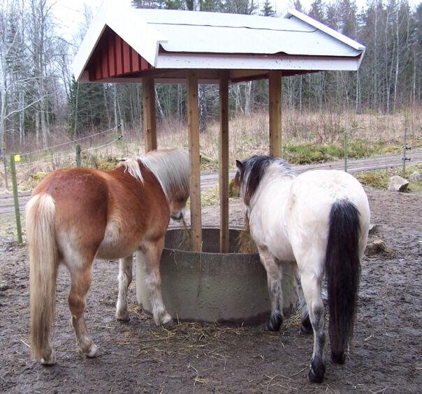 bygga foderbord häst