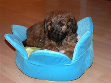 Pippi vilar i sin säng.