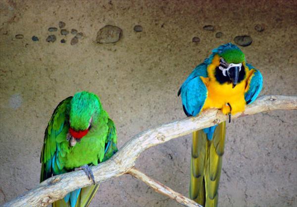 Fågelskådning (32).jpg