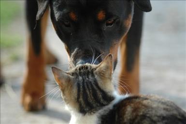 Ett möte mellan hund och katt... Av: Ida Lundahl