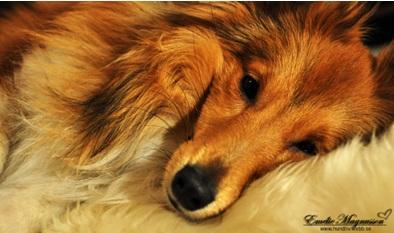 hund3.jpg