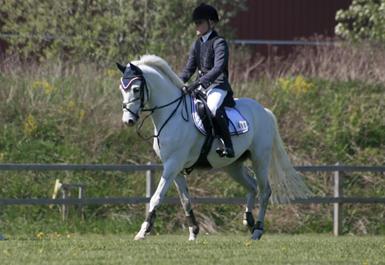 Konditionsträna hästen