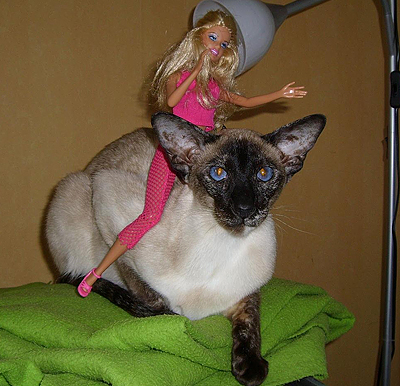 Tofflan-o-Barbie2.jpg